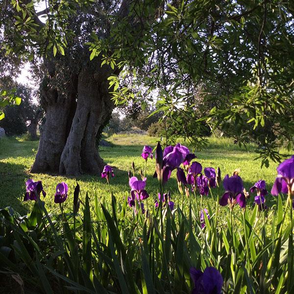 gallery-garden